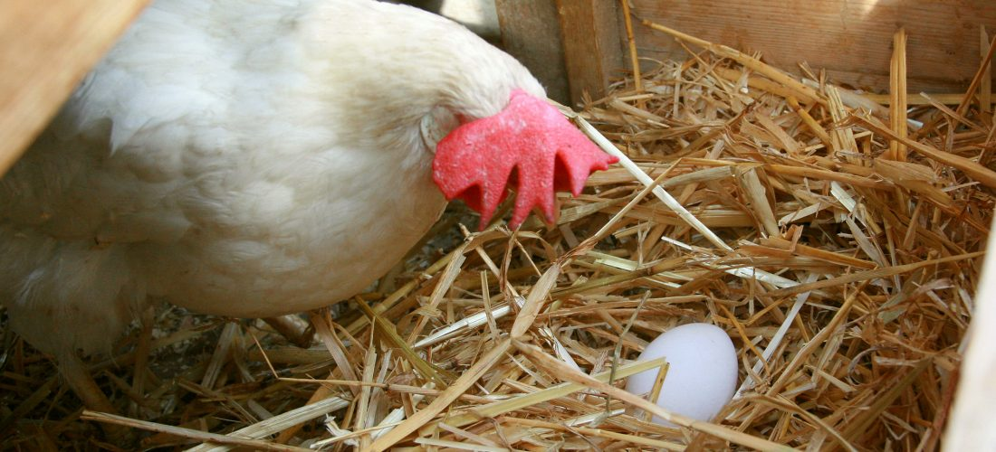 Chicken and Egg: The Resources vs. Revenue Dilemma in 3D Printing